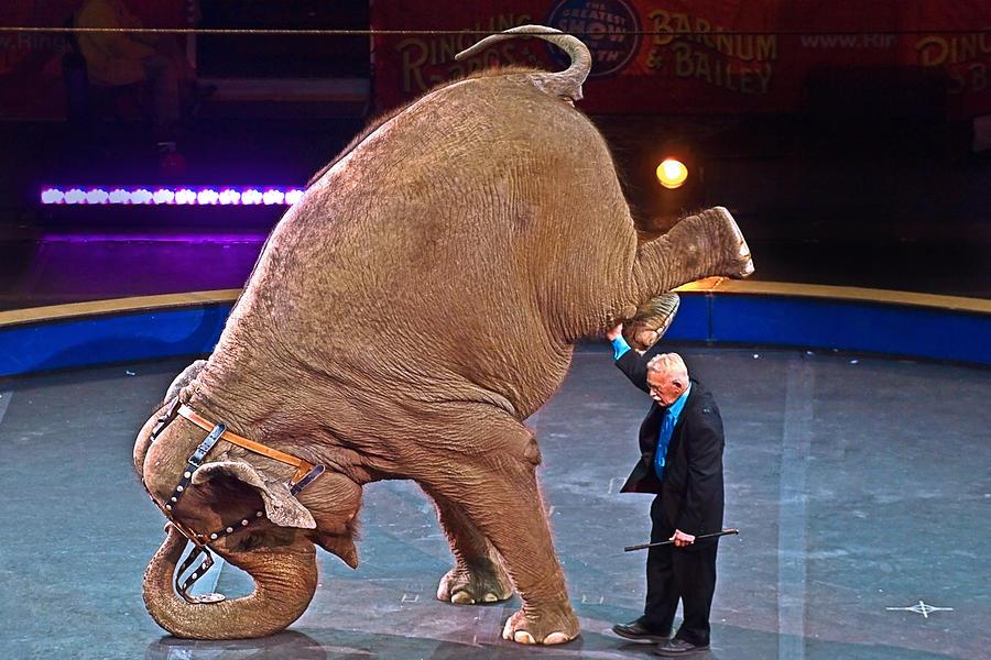 2015-03-05_Circus_Elephant_Original